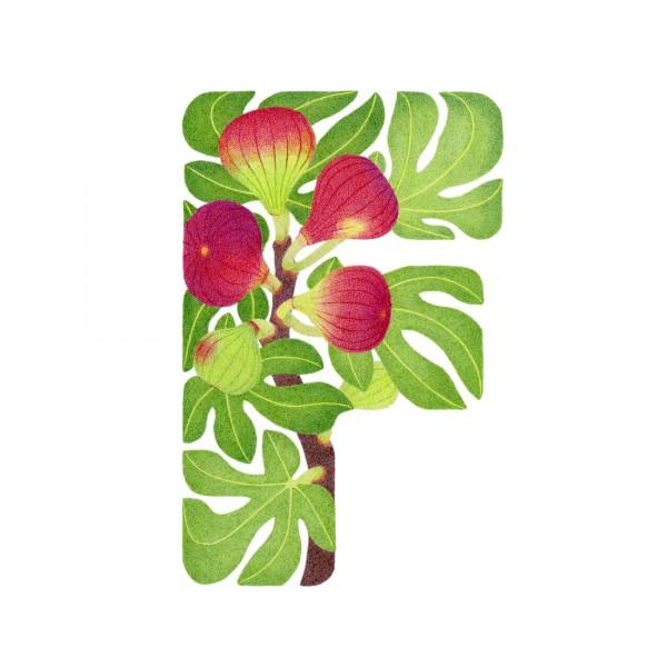 F-Fig
